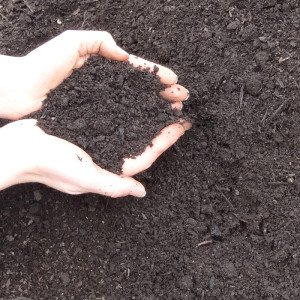 mushroom-compost
